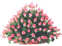 Flowers to India : Dutch Pink Roses in Basket Arrangement